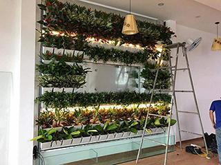 Công ty thiết kế và thi công vườn đứng đẹp và hiệu quả nhất với phong cảnh nhà bạn