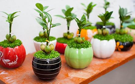 Cảm nhận của mọi người khi thực hiện trồng cây trong nhà