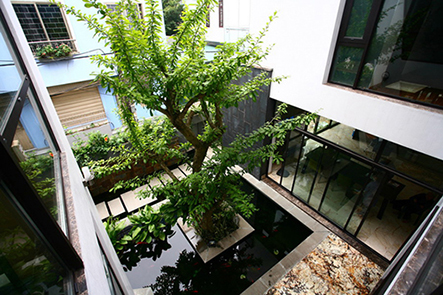 Những loại cây mà bạn có thể thực hiện trồng trong nhà.