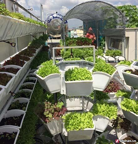 Tại sao bạn nên trồng rau sạch tại nhà
