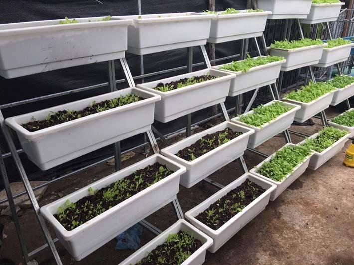 Tuyệt chiêu trồng rau sạch dưới 1.5 triệu đồng với kệ trồng rau
