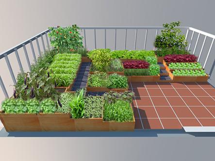 Kỹ thuật trồng rau sạch hiệu quả mà bạn nên biết-Xem cách thực hiện trồng rau