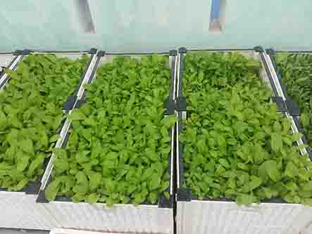 Những dụng cụ để việc trồng rau trong thùng xốp đạt hiệu quả cao nhất