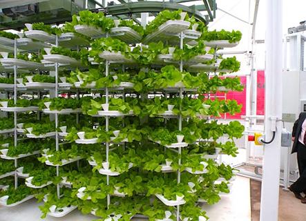 Địa chỉ thiết kế mô hình trồng rau thủy canh tại nhà uy tín nhất tại TPHMC-công ty Quang Anh