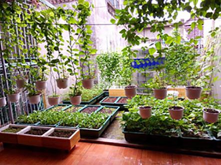 Tìm hiểu về những mẫu thiết kế vườn rau trên sân thượng đẹp và hiệu quả nhất hiện nay
