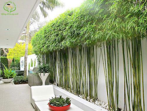 Hướng dẫn những vị trí đặt cây cảnh trong nhà tốt cho phong thủy