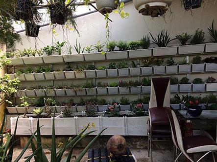 Địa chỉ bán vật liệu làm vườn thẳng đứng chất lượng và giá rẻ