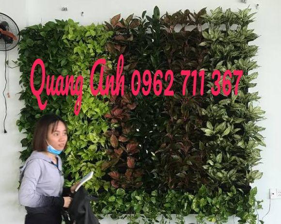 Hé lộ địa chỉ thi công tường cây xanh tốt nhất hiện nay tại tpchm