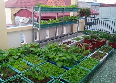 Vườn rau sạch – Lợi ích của gia đình