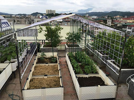 Địa chỉ thiết kế vườn rau sạch tại nhà uy tín và giá rẻ tại tphcm