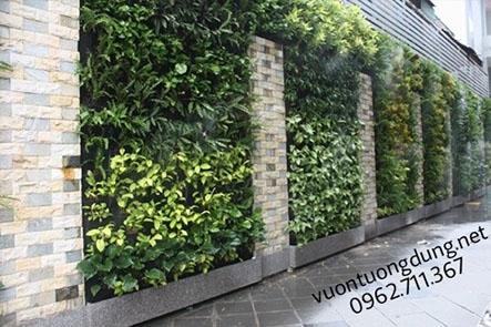 Nhà mát rợi nhờ mảng tường cây xanh