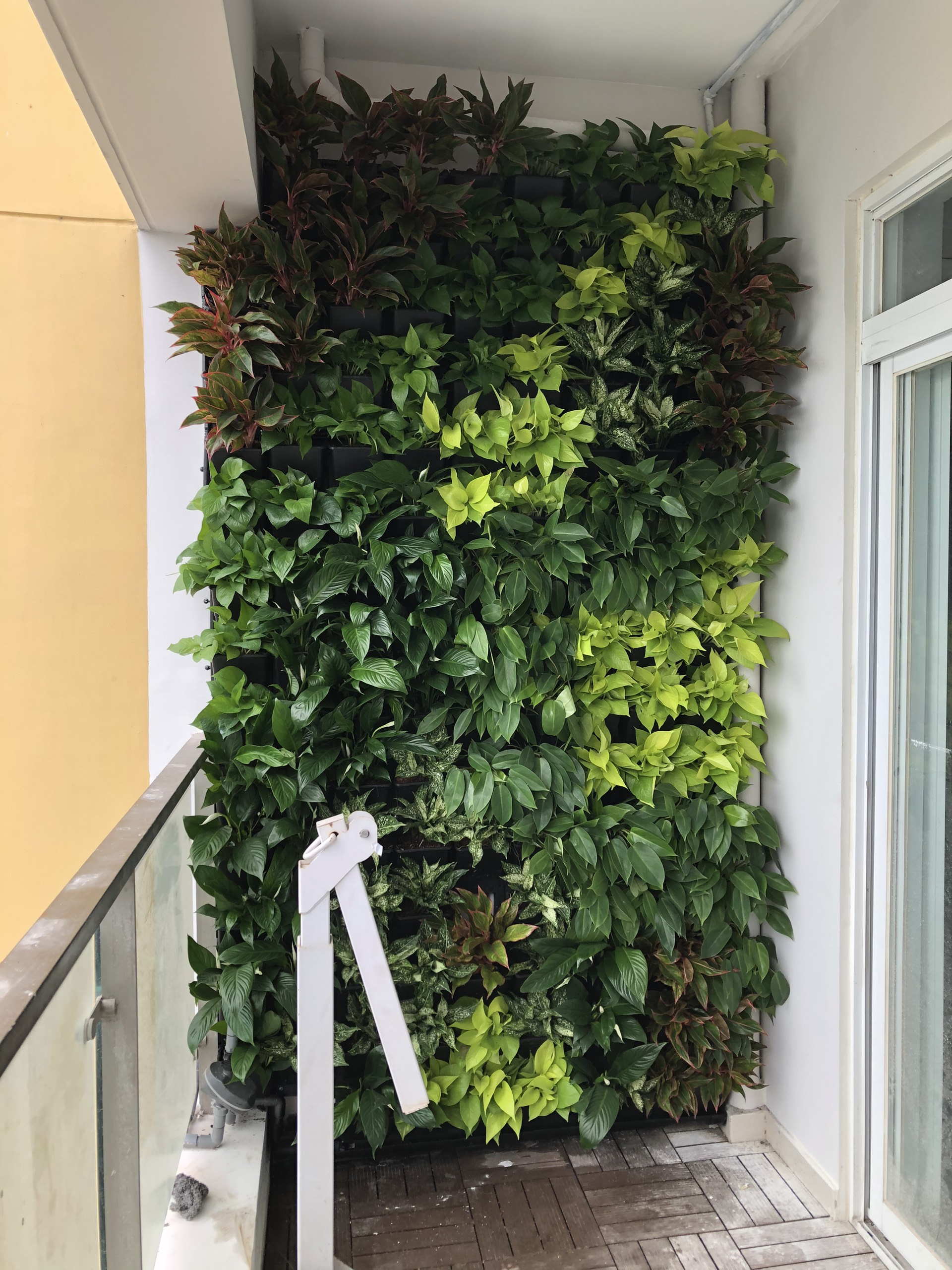 Quang Anh HCM - Thi công vườn tường đứng trên ban công đẹp như mơ tại chung cư Quận 7!