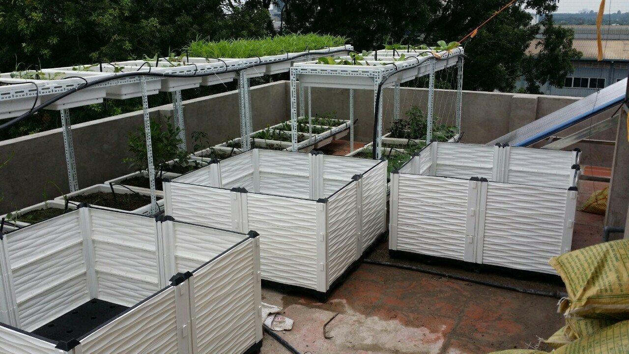 Chậu ghép trồng cây giá rẻ tại TP. Hồ Chí Minh