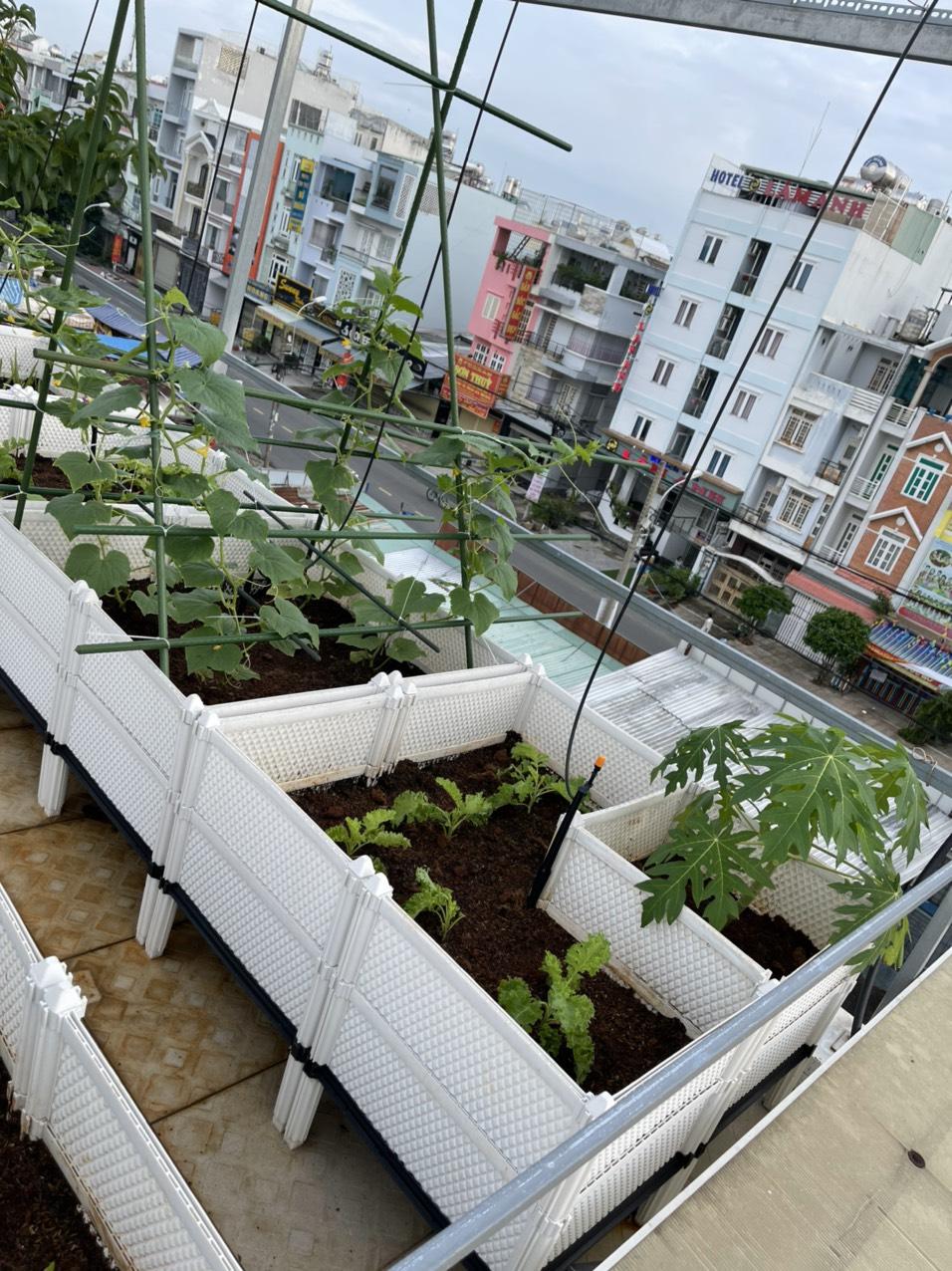 Vườn rau xanh trên sân thượng kết hợp hệ thống tưới tự động